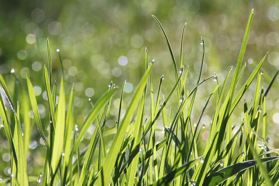 うさぎの牧草の種類と食べないときの原因と対処法。おすすめチモシーまで