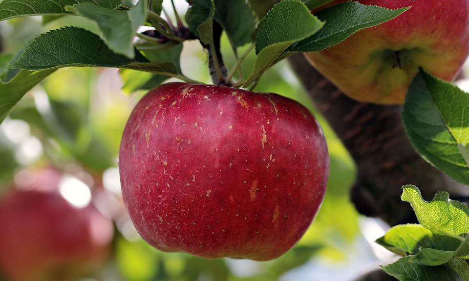 うさぎのりんごの与え方。食べていい量と栄養分について