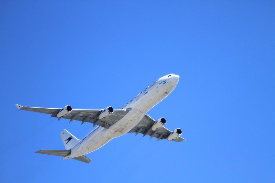 引っ越すときに役立つうさぎの飛行機の乗せ方。料金や危険度について