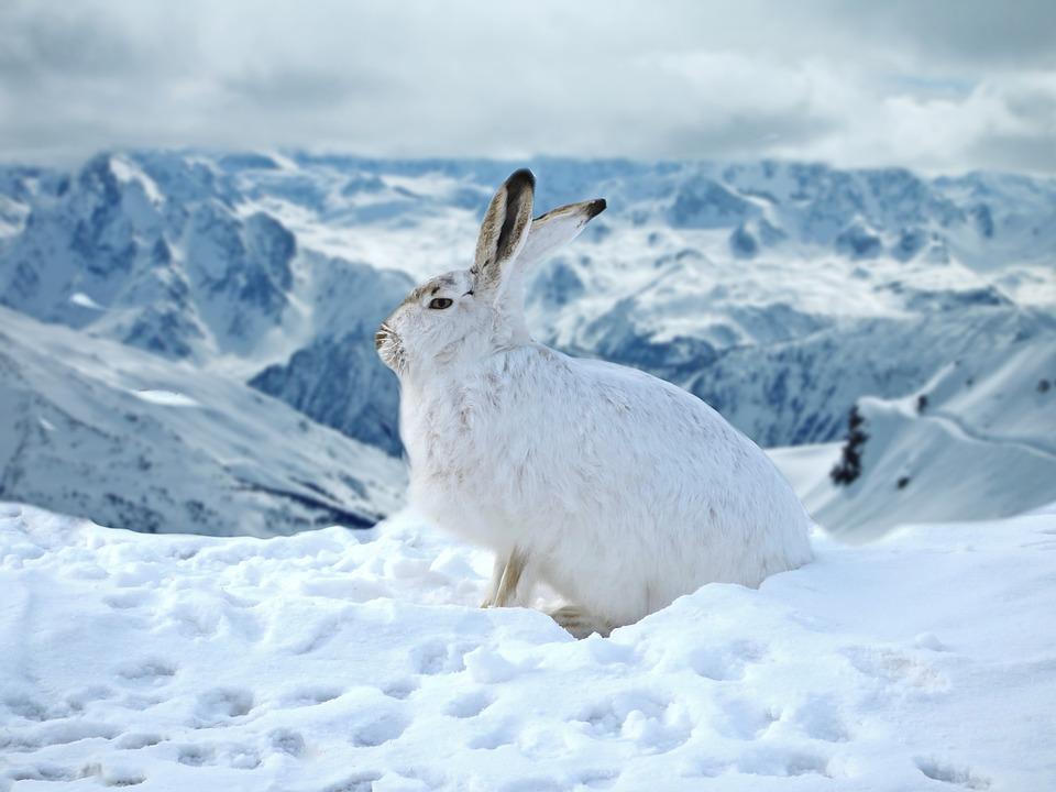 うさぎは冬でも冬眠はしない。寒い時期の巣穴での過ごし方