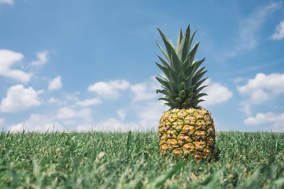 うさぎの好物パイナップルの効果がすごい!消化酵素の働きと毛球症予防ができる